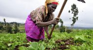 femme-agricultrice-agriculture-afrique